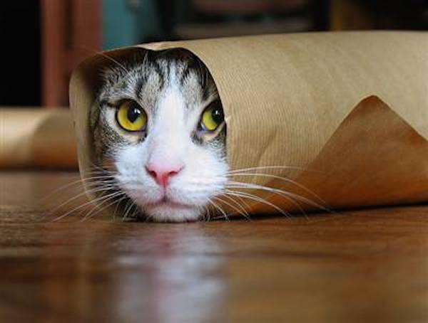 EXCLU Chakipet : jouez à cache-cache avec nos amis les chats ! 2