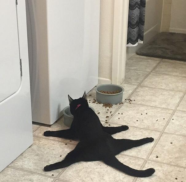 chat-animal-etrange-1