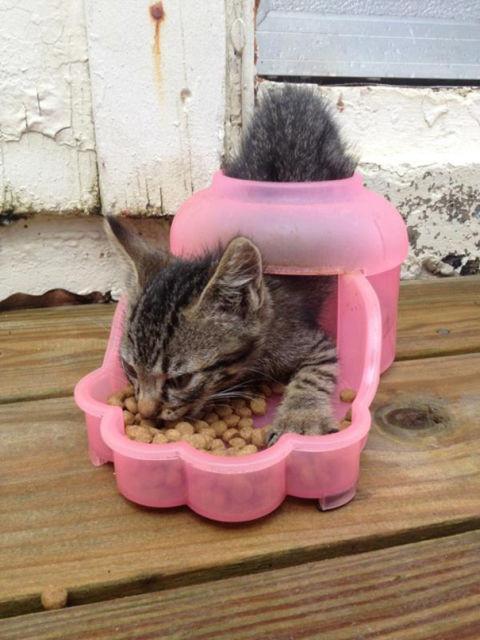 chat-animal-etrange-5