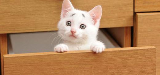 Gary, le chat qui a toujours l'air inquiet 5