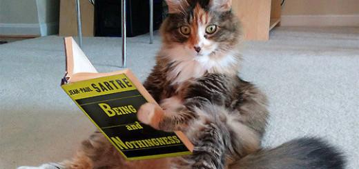 Les chats : ces stars du web ! 15