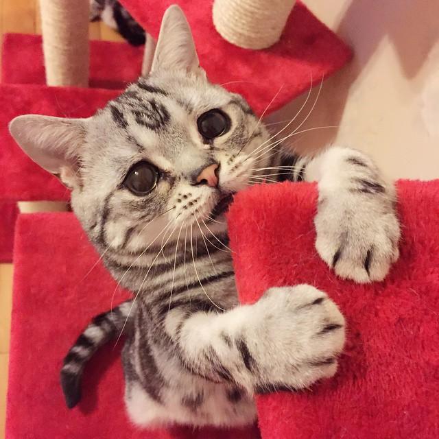 chat-le-plus-triste-1