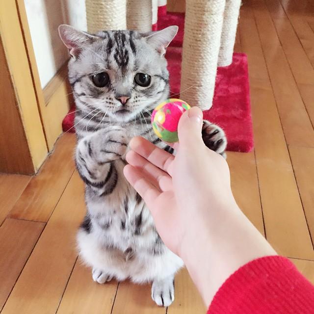 chat-le-plus-triste-11
