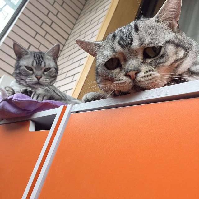 chat-le-plus-triste-12