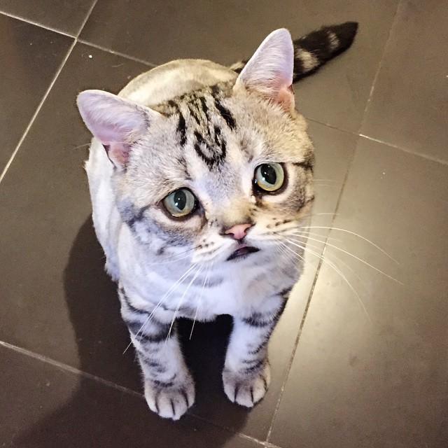 chat-le-plus-triste-13