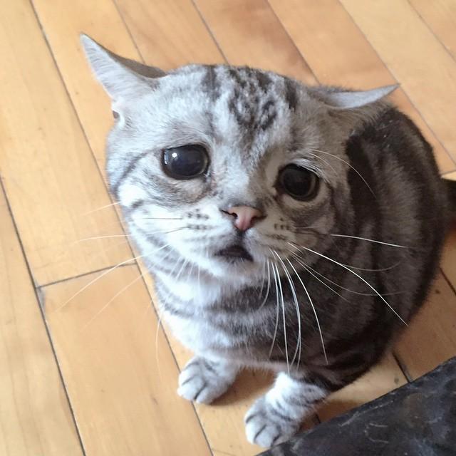 chat-le-plus-triste-2