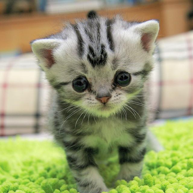 chat-le-plus-triste-3