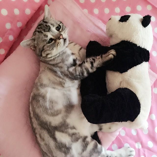 chat-le-plus-triste-4