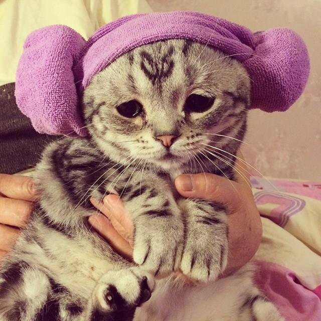 chat-le-plus-triste-6