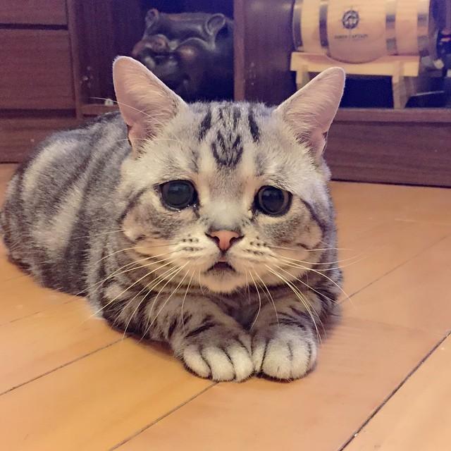 chat-le-plus-triste-7