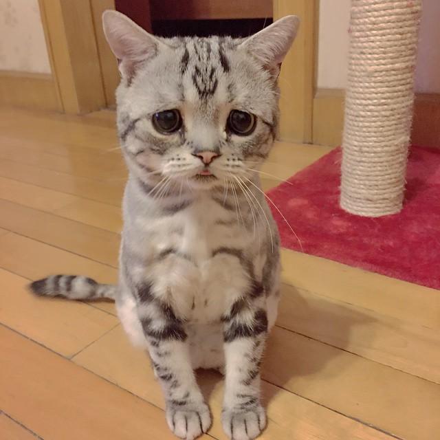 chat-le-plus-triste-8