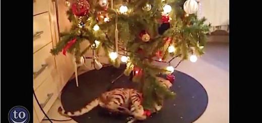 Les chats n'aiment pas les sapins !!