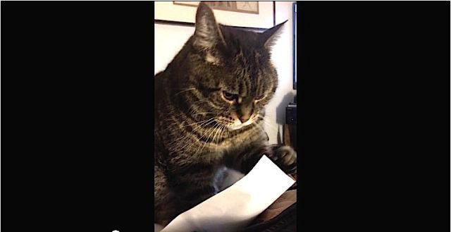Mr chat s'amuse avec une feuille de papier.