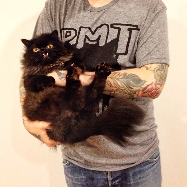 chat-princesse-monster-truck-5