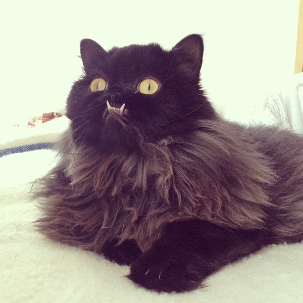 chat-princesse-monster-truck-8