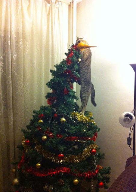 chat-sapin-noel-3