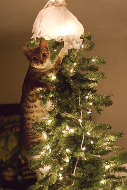chat-sapin-noel-4