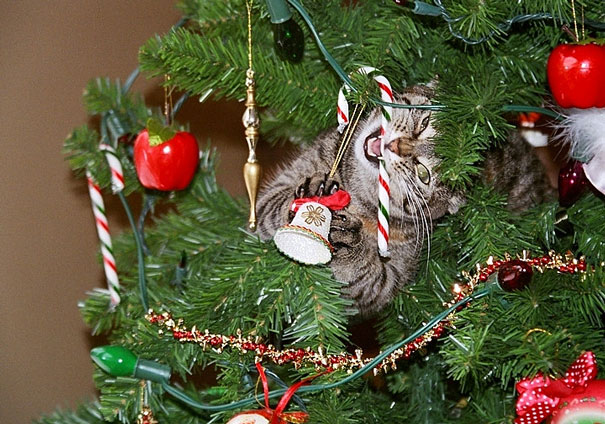 chat-sapin-noel-8