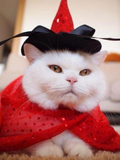 chat vetement13