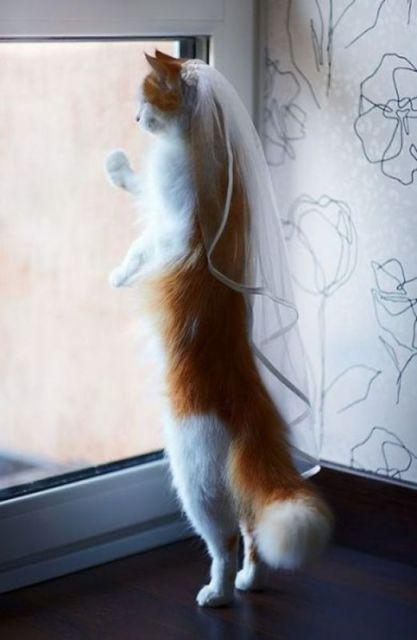 chat vetement14