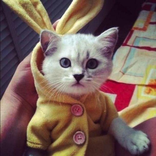 chat vetement21