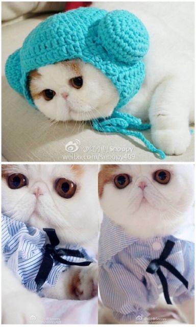 chat vetement7