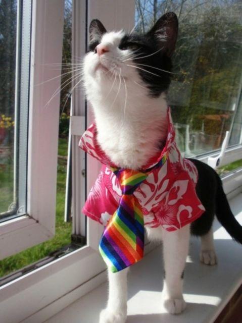 chat vetement8