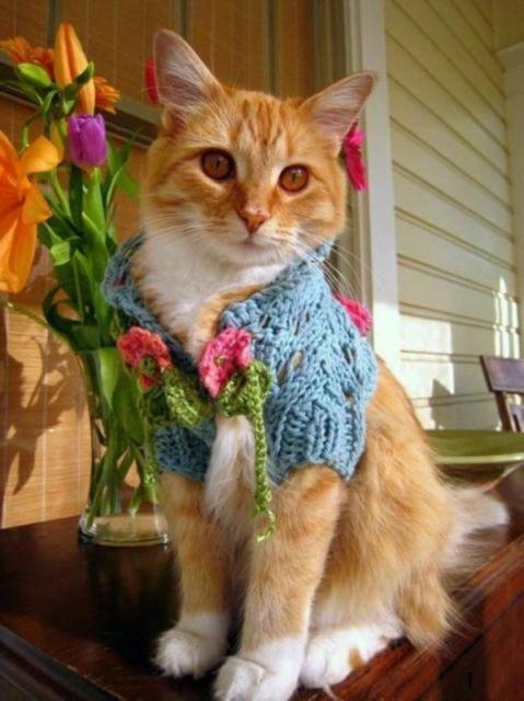 chat vetement9