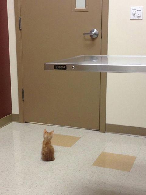 chat-veterinaire-2