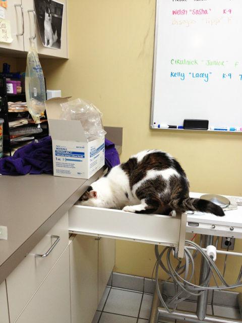 chat-veterinaire-7