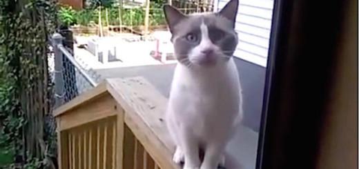 Ce chat a des pouvoirs !!!