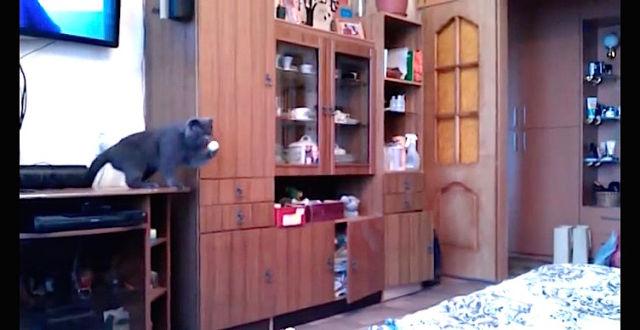 Comment jouer au ping pong avec son chat ?