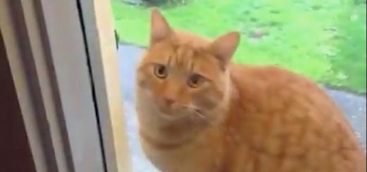 Ce chat a une super technique pour rentrer dans la maison !