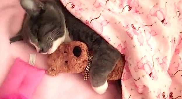 Un moment de tendresse entre un chat et son doudou.
