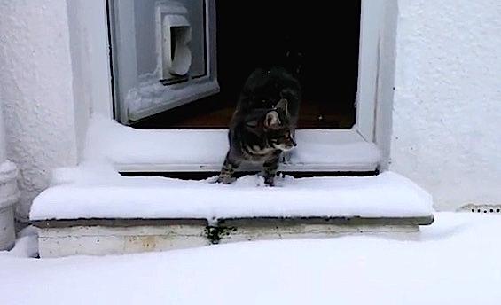 Ce chat découvre la neige pour la première fois... et il adore ça !