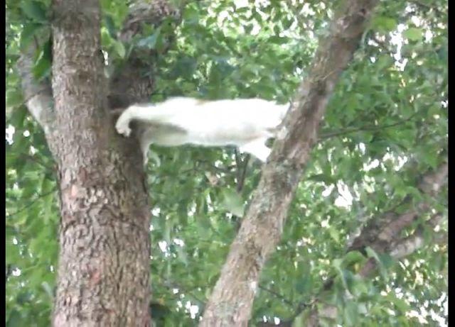 EMOUVANT : cette maman chat secourt son petit !