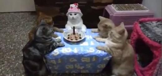 Un anniversaire de chat
