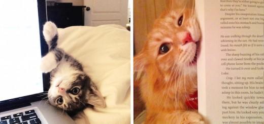 Les chats qui nous embêtent JUSTE quand il ne faut pas ! 20