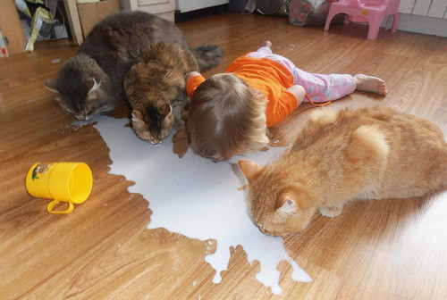 chats enfants 11