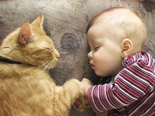 chats enfants 5