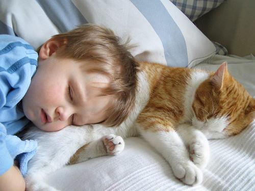 chats enfants 6