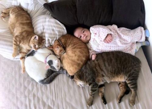 chats enfants 7