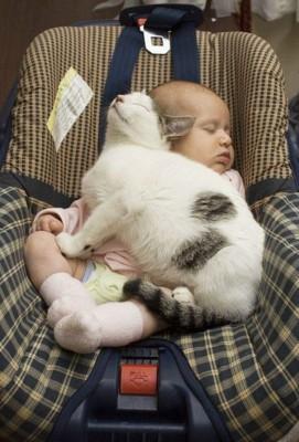 chats enfants 8
