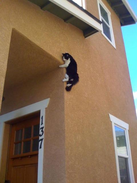 chats-mauvais-choix-11