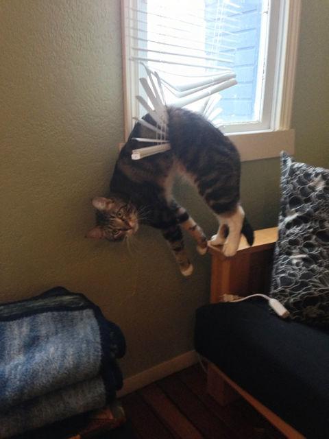 chats-mauvais-choix-13