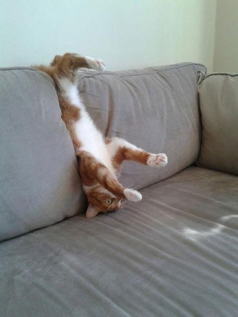 chats-mauvais-choix-14