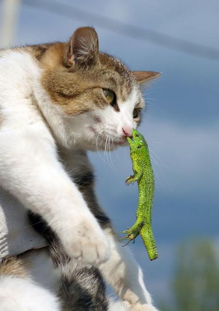 chats-mauvais-choix-15