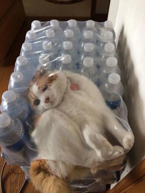 chats-mauvais-choix-16