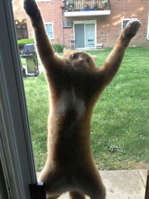 chats-mauvais-choix-17