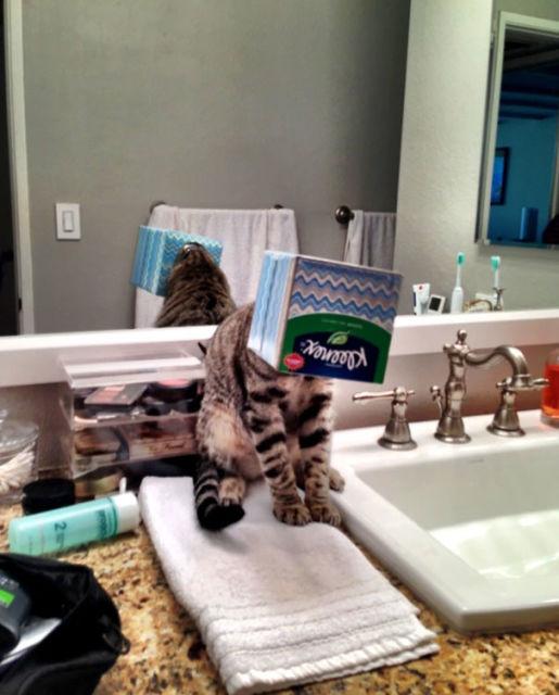 chats-mauvais-choix-2